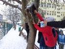 Dokarmiamy ptaki zimą klasa III d